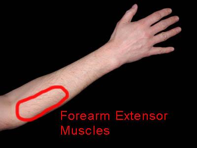 前腕伸筋群 を振動刺激する